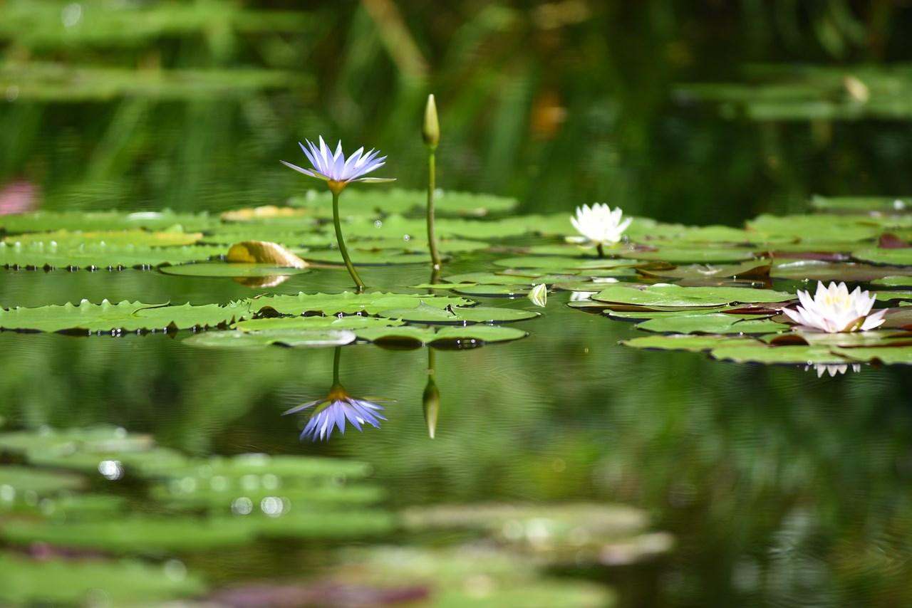 【北川村モネの庭マルモッタン】世界最高峰の花の楽園。モネが求めたユートピア。