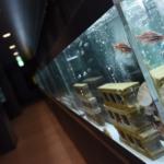 斬新!廃校を使った水族館 「むろと廃校水族館」