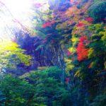 仁淀ブルーと一紅葉のコントラスト。「安居渓谷」