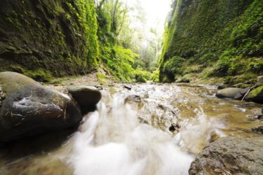 【伊尾木洞】みなぎる緑の生命力!自然が作り上げた神秘の洞窟