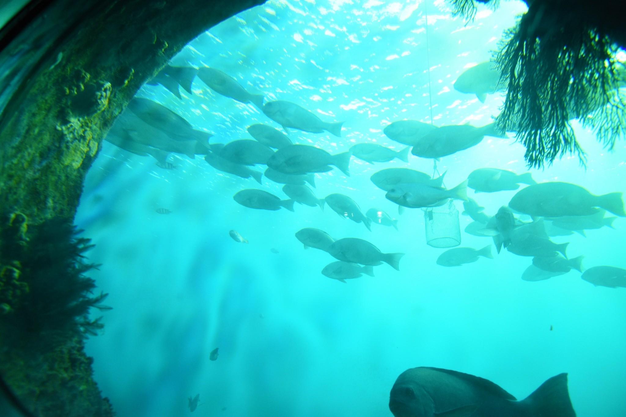 幻想的海底のロマン!青く輝く海の神秘!「足摺海底館」