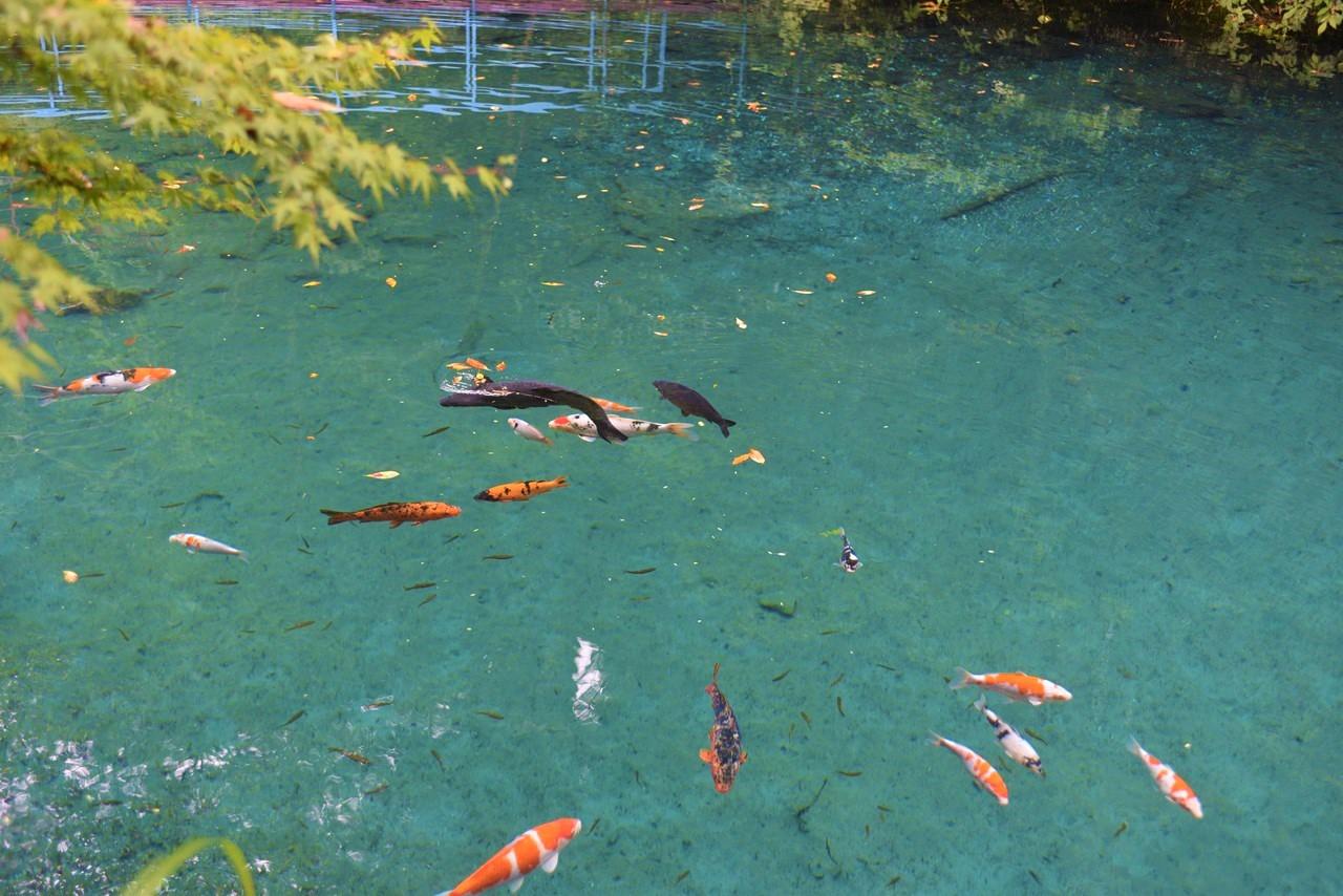 【白龍湖】高知版モネの池!透き通るコバルトブルーが神秘的。
