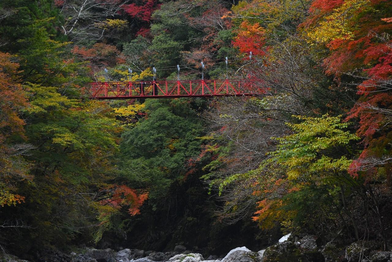 【別府渓谷】これが秘境!大自然が奏でる紅葉の披露会。