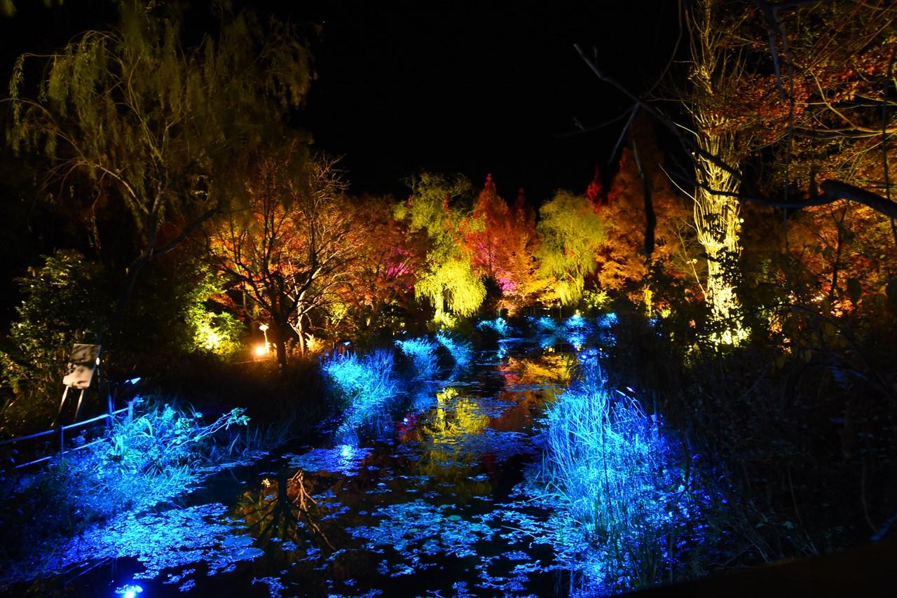 光のフェスタinモネの庭2020/ライトアップイベント。